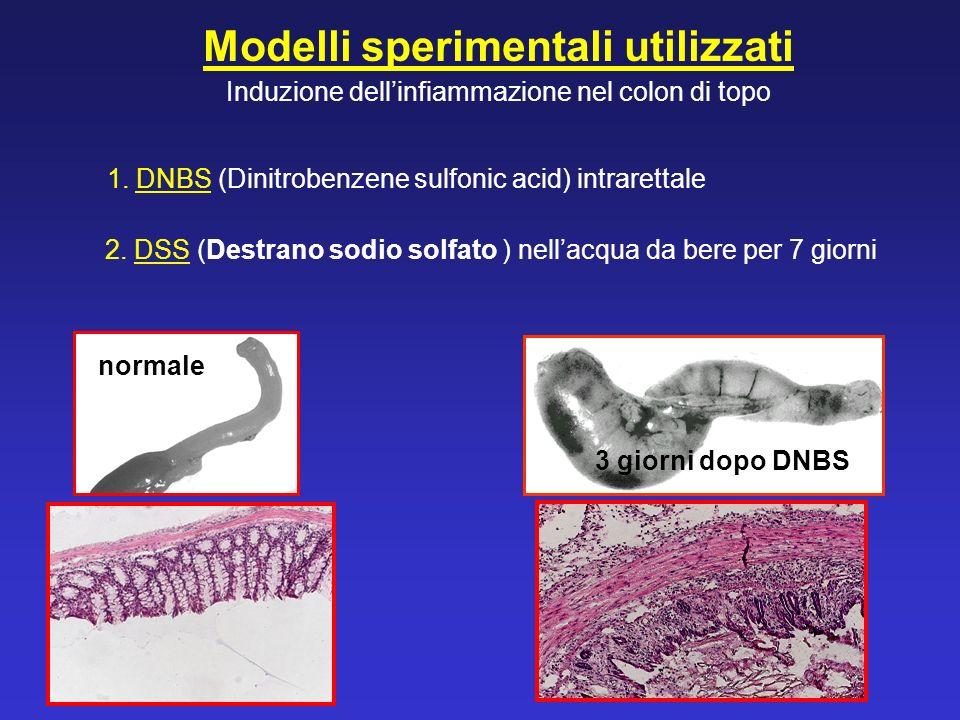 Modelli sperimentali utilizzati