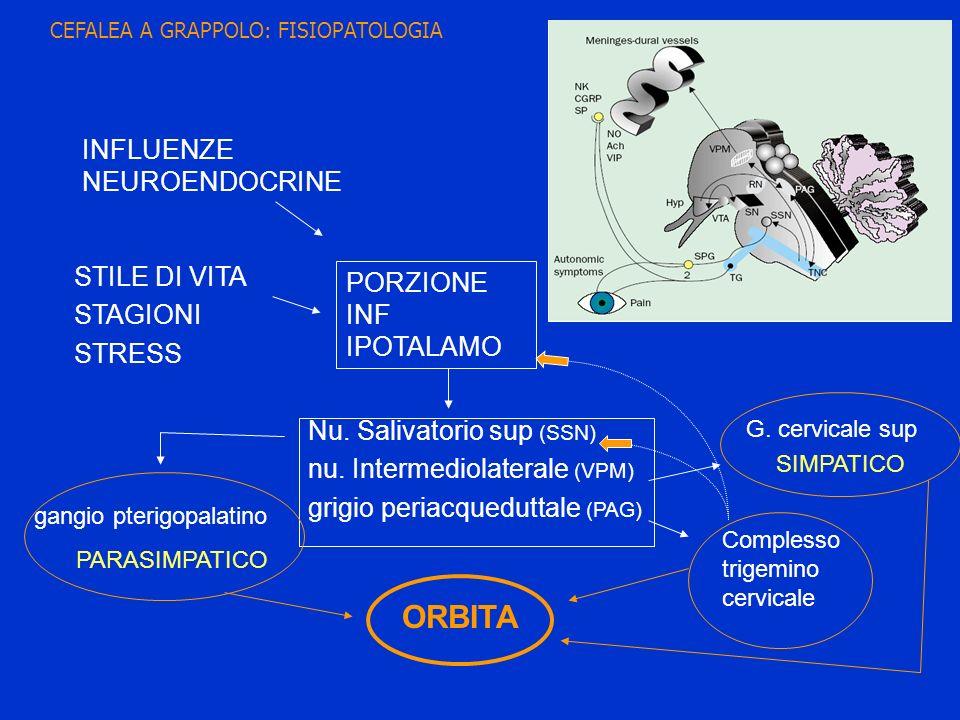 ORBITA INFLUENZE NEUROENDOCRINE STILE DI VITA PORZIONE INF IPOTALAMO
