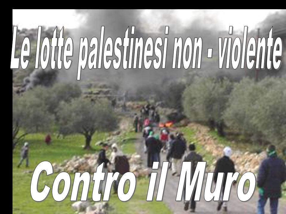 Le lotte palestinesi non - violente