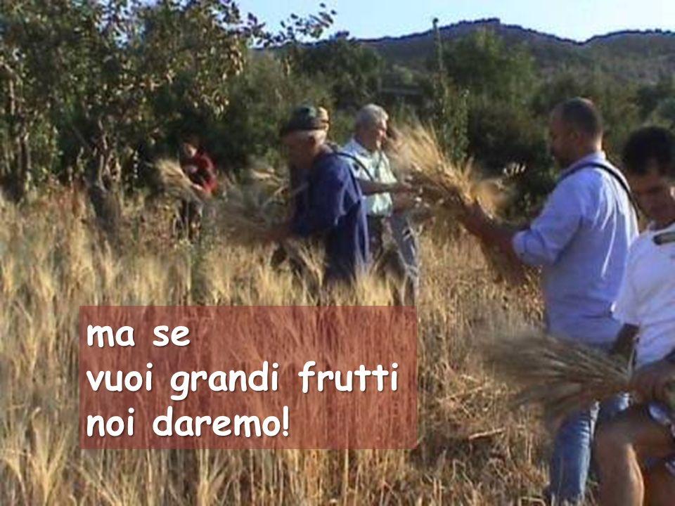 ma se vuoi grandi frutti noi daremo!