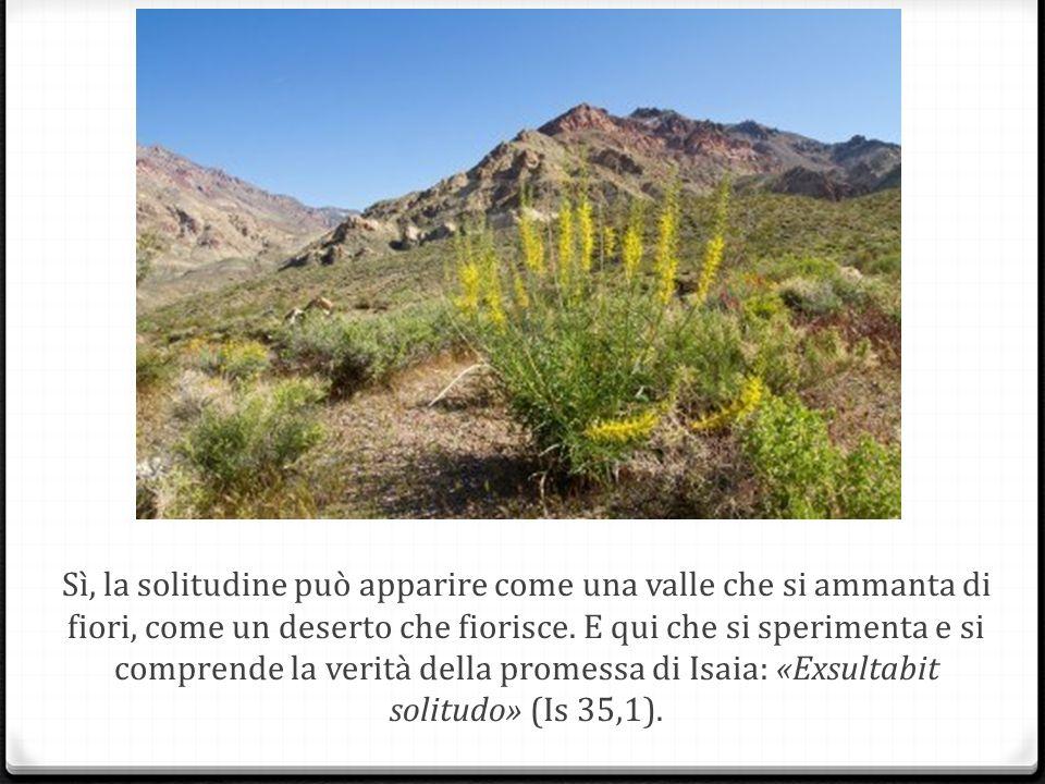 Sì, la solitudine può apparire come una valle che si ammanta di fiori, come un deserto che fiorisce.
