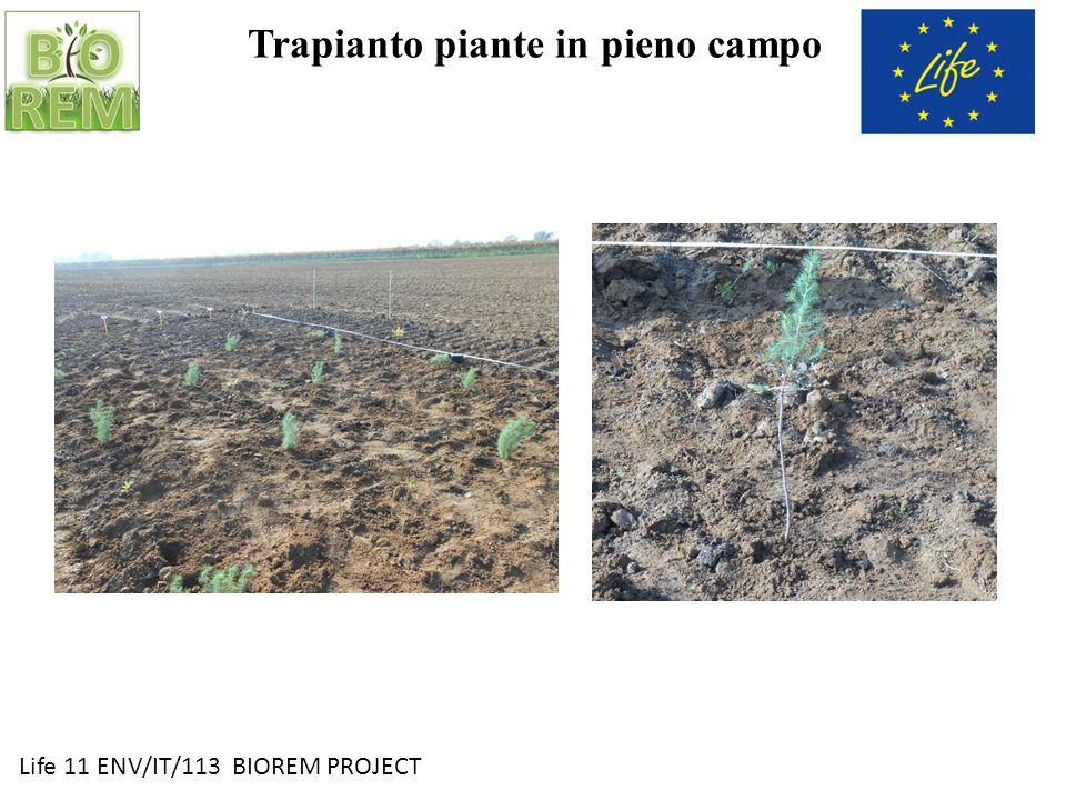 Trapianto piante in pieno campo
