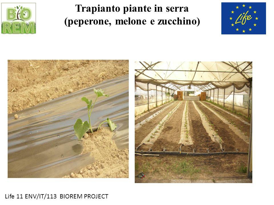 Trapianto piante in serra (peperone, melone e zucchino)