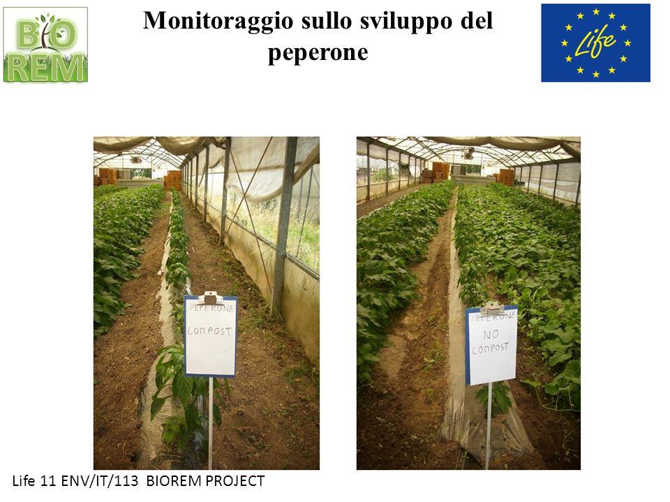 Monitoraggio sullo sviluppo del peperone