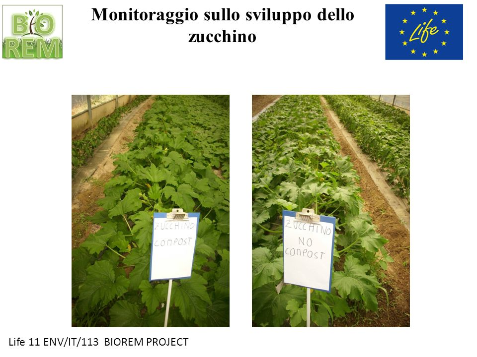 Monitoraggio sullo sviluppo dello zucchino