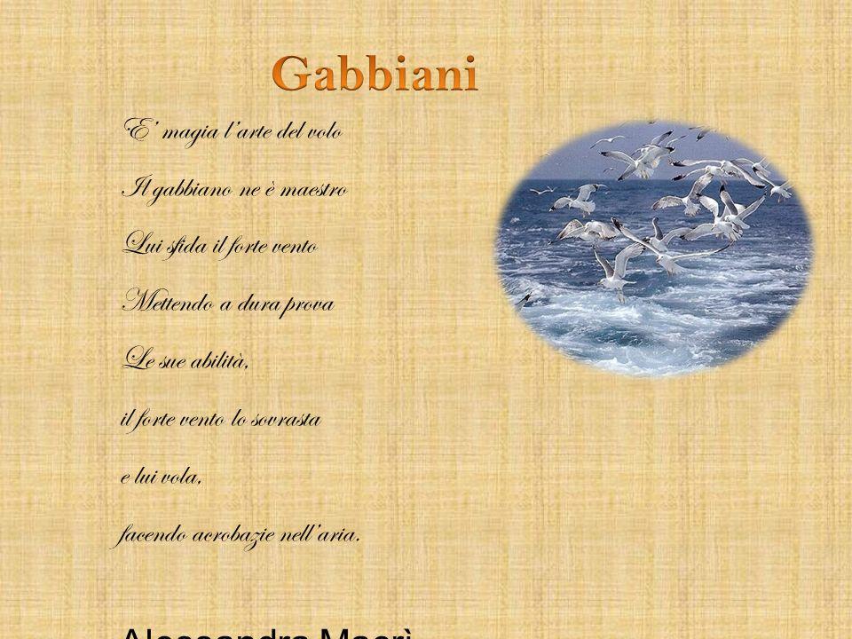 Gabbiani Alessandra Macrì E' magia l'arte del volo