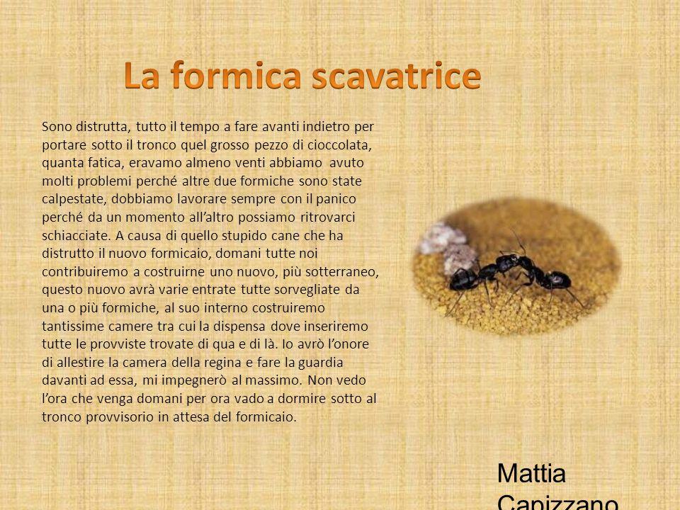 La formica scavatrice Mattia Capizzano