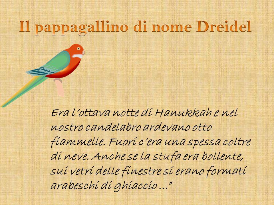 Il pappagallino di nome Dreidel