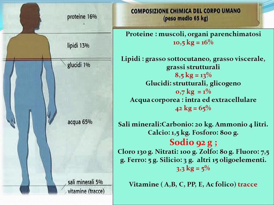 Proteine : muscoli, organi parenchimatosi 10,5 kg = 16%