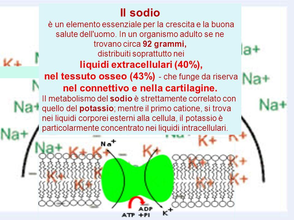 Il sodio è un elemento essenziale per la crescita e la buona salute dell uomo. In un organismo adulto se ne trovano circa 92 grammi,