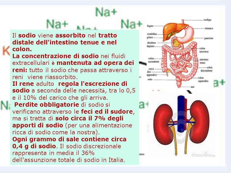Il sodio viene assorbito nel tratto distale dell intestino tenue e nel colon.