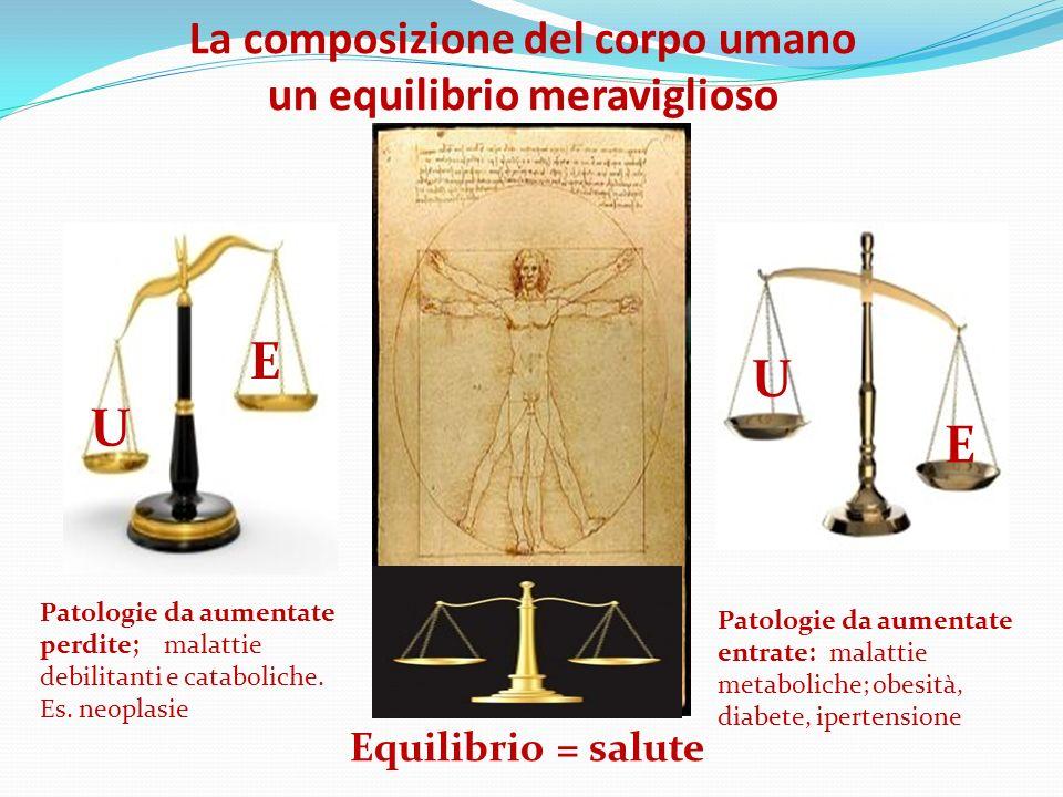 La composizione del corpo umano un equilibrio meraviglioso