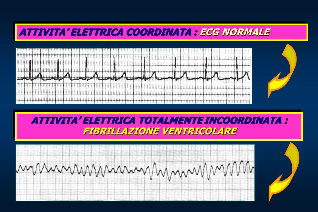 ATTIVITA' ELETTRICA COORDINATA : ECG NORMALE