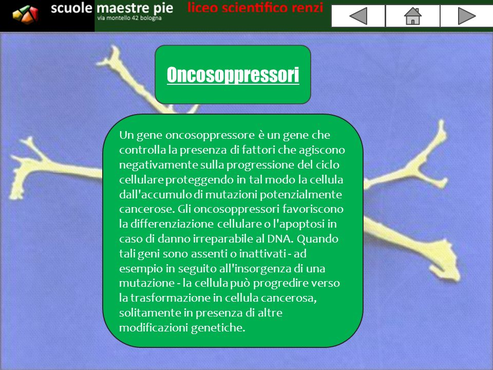 Oncosoppressori