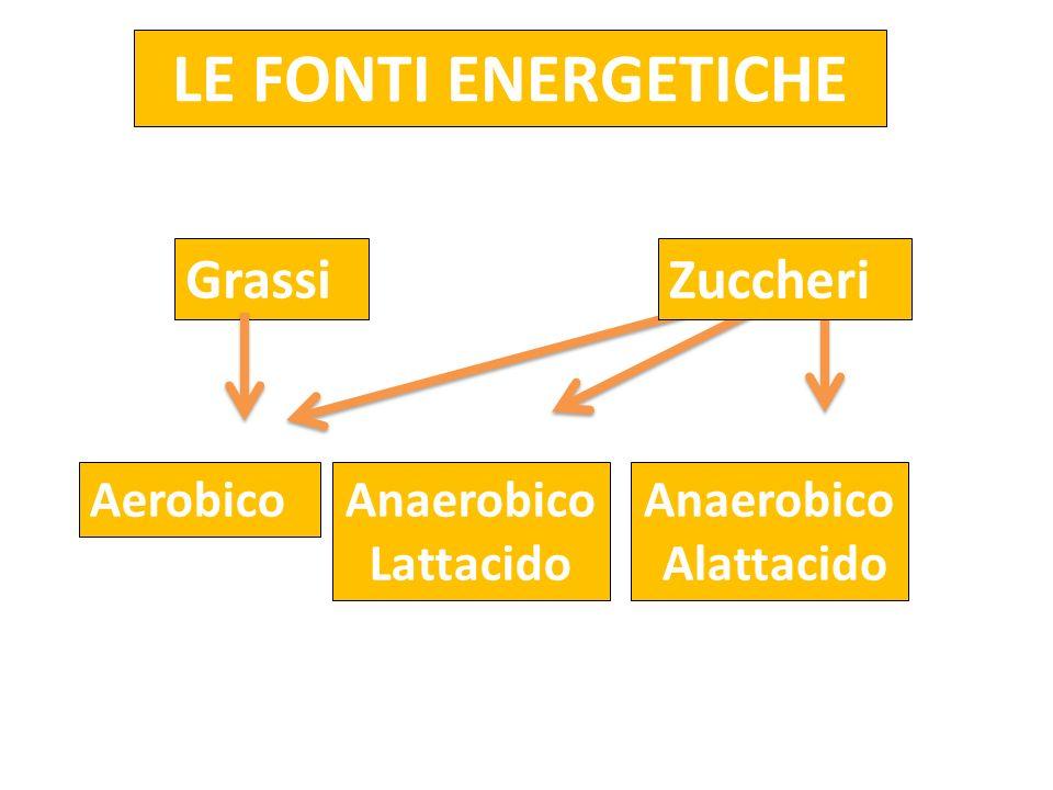 LE FONTI ENERGETICHE Grassi Zuccheri Aerobico Anaerobico Lattacido