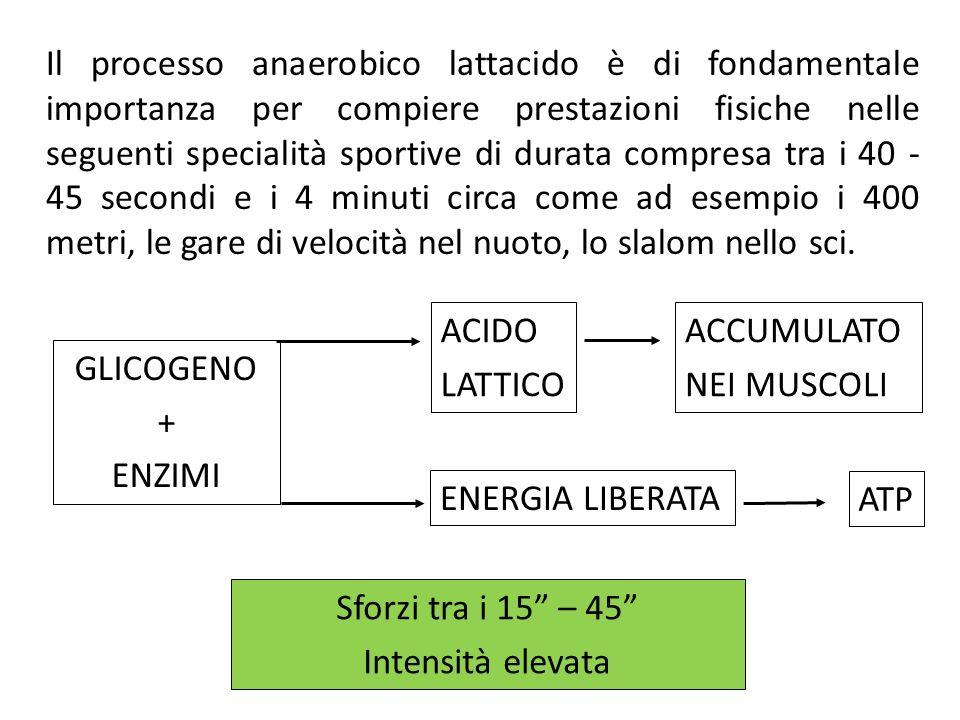 ACIDO LATTICO ACCUMULATO NEI MUSCOLI GLICOGENO + ENZIMI
