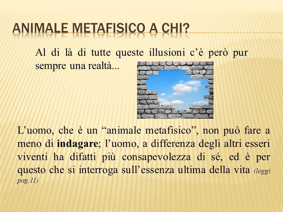 Animale metafisico a Chi
