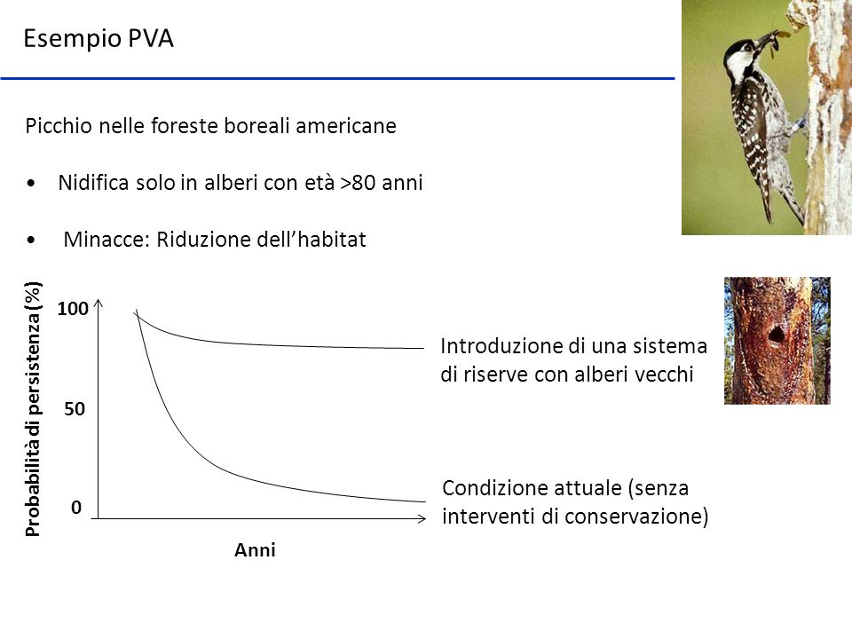 Esempio PVA Picchio nelle foreste boreali americane