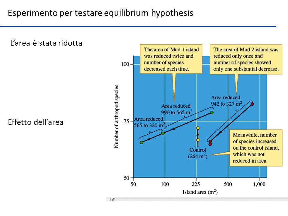 Esperimento per testare equilibrium hypothesis