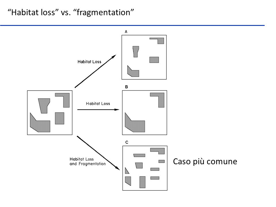 Habitat loss vs. fragmentation