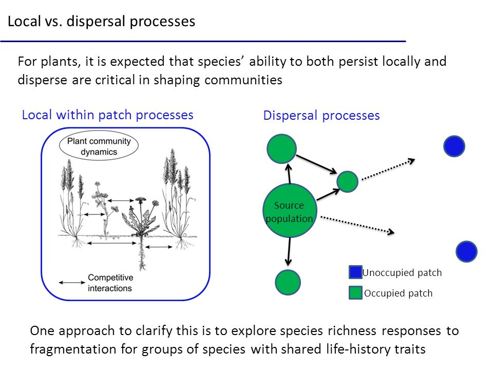Local vs. dispersal processes