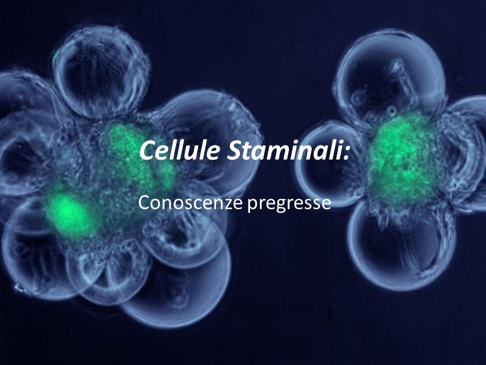 Cellule Staminali: Conoscenze pregresse
