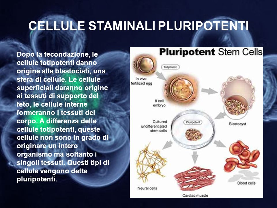 CELLULE STAMINALI PLURIPOTENTI