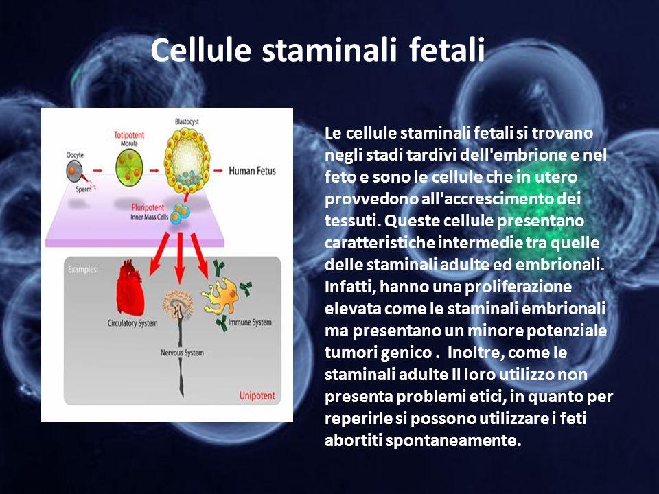 Cellule staminali fetali