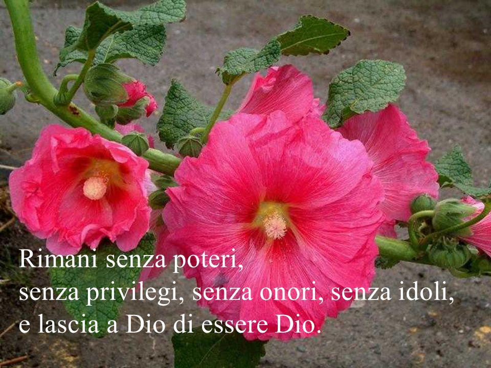 Rimani senza poteri, senza privilegi, senza onori, senza idoli, e lascia a Dio di essere Dio.