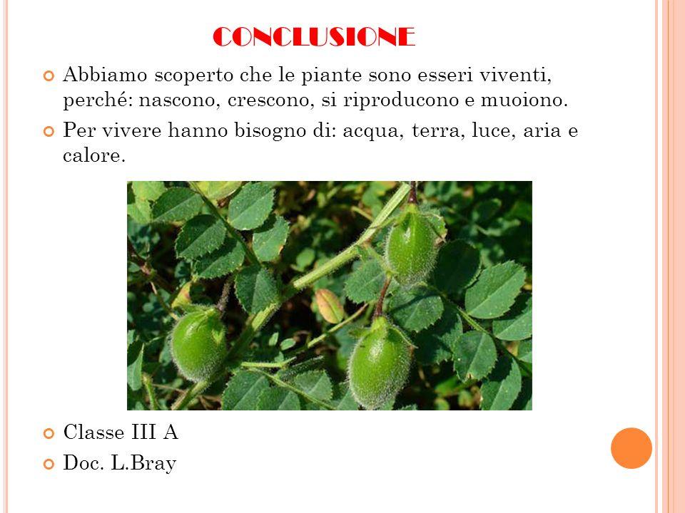 conclusione Abbiamo scoperto che le piante sono esseri viventi, perché: nascono, crescono, si riproducono e muoiono.