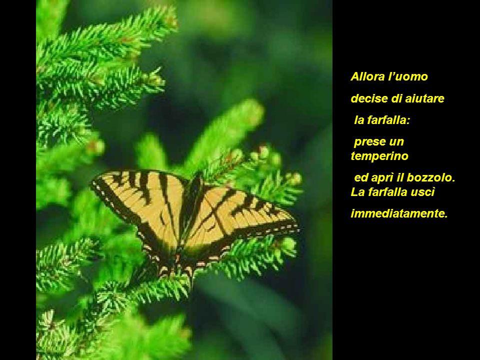 Allora l'uomo decise di aiutare. la farfalla: prese un temperino. ed aprì il bozzolo. La farfalla uscì.