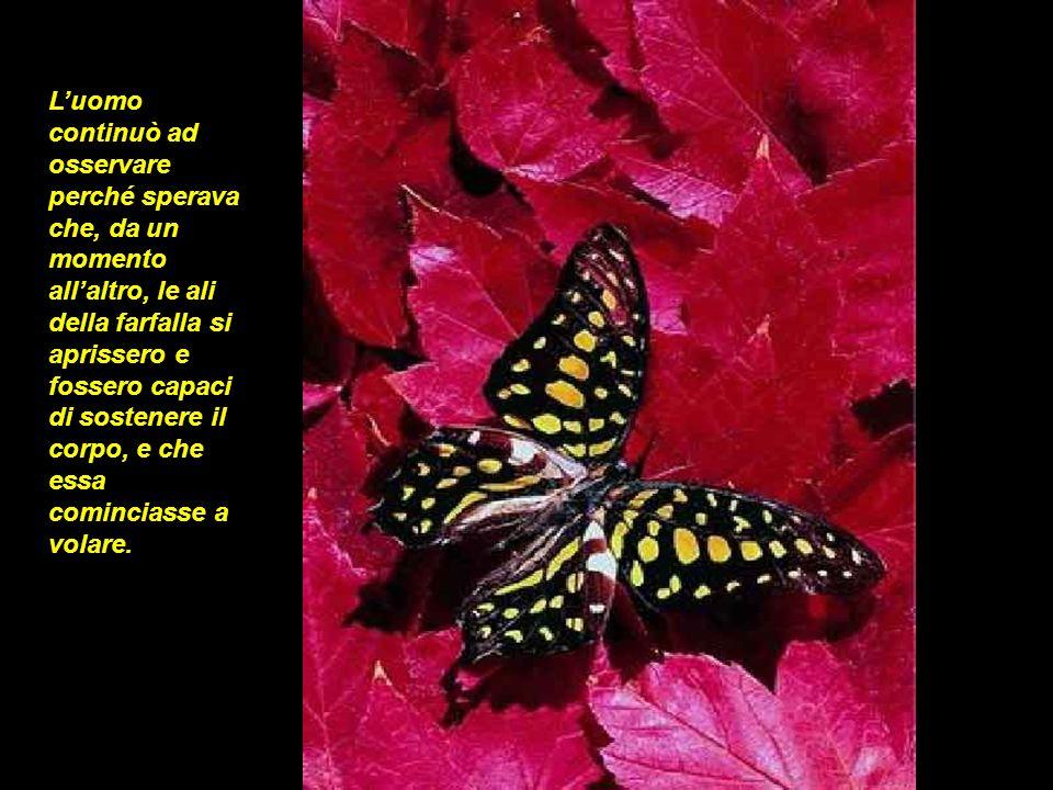 L'uomo continuò ad osservare perché sperava che, da un momento all'altro, le ali della farfalla si aprissero e fossero capaci di sostenere il corpo, e che essa cominciasse a volare.