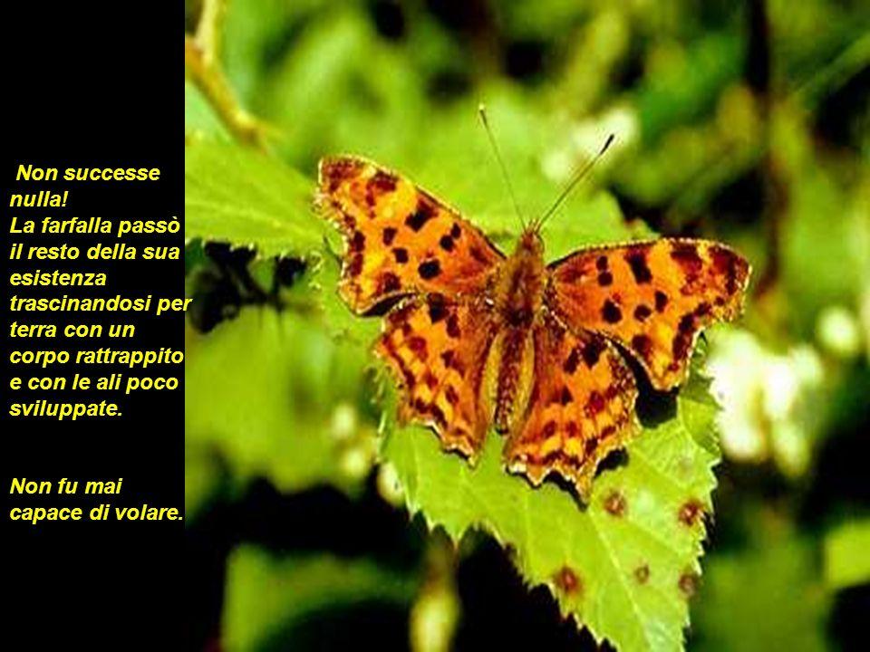Non successe nulla! La farfalla passò il resto della sua esistenza trascinandosi per terra con un corpo rattrappito e con le ali poco sviluppate.