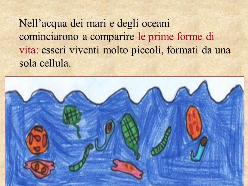 Nell'acqua dei mari e degli oceani cominciarono a comparire le prime forme di vita: esseri viventi molto piccoli, formati da una sola cellula.