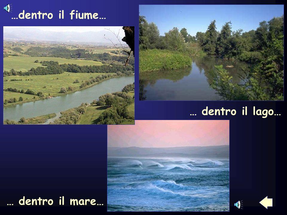 …dentro il fiume… … dentro il lago… … dentro il mare… 3