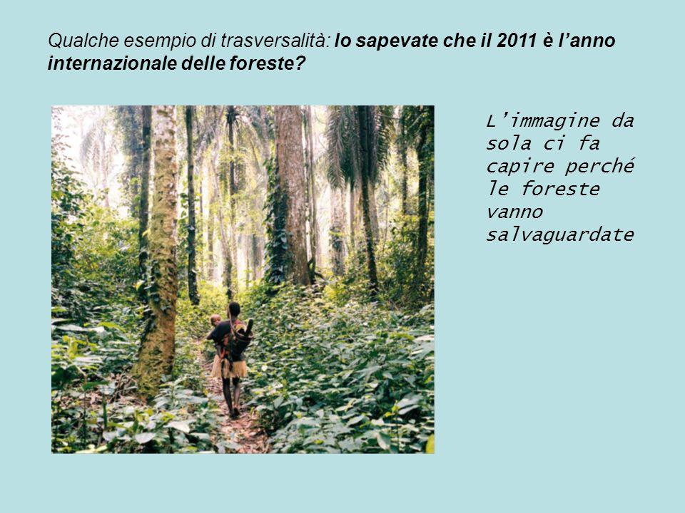 Qualche esempio di trasversalità: lo sapevate che il 2011 è l'anno internazionale delle foreste