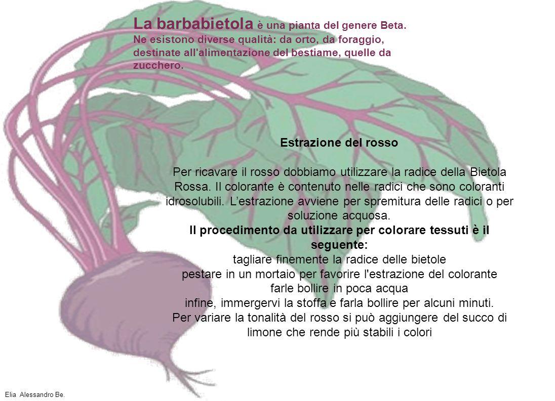 La barbabietola è una pianta del genere Beta