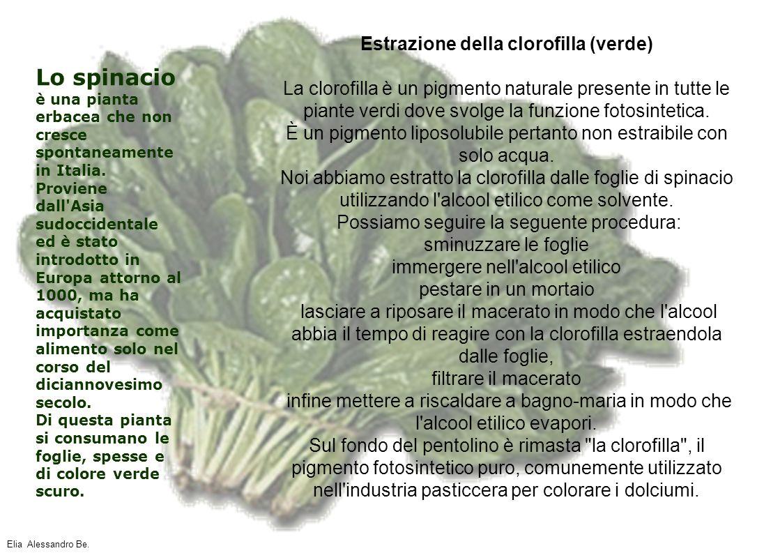 Estrazione della clorofilla (verde)
