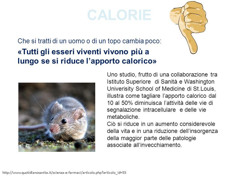 Calorie Che si tratti di un uomo o di un topo cambia poco: «Tutti gli esseri viventi vivono più a lungo se si riduce l'apporto calorico»