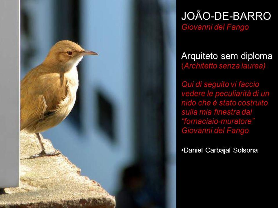 JOÃO-DE-BARRO Arquiteto sem diploma Giovanni del Fango