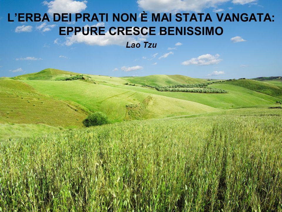 L'ERBA DEI PRATI NON È MAI STATA VANGATA: EPPURE CRESCE BENISSIMO