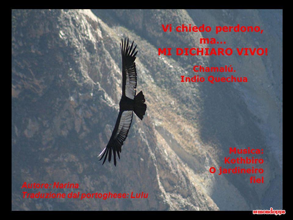 Vi chiedo perdono, ma… MI DICHIARO VIVO! Chamalú. Indio Quechua