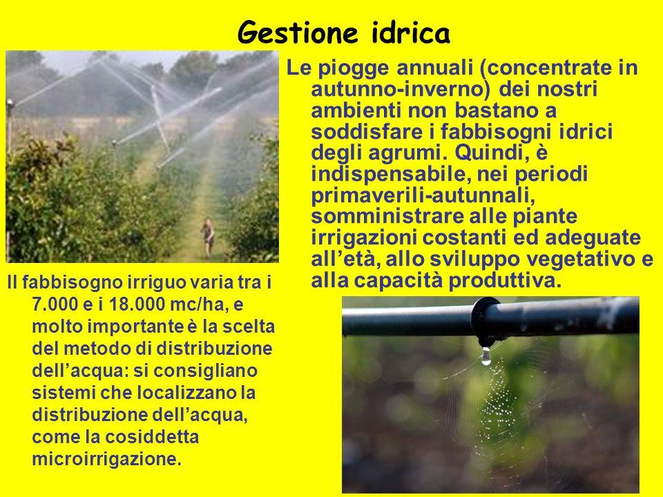 Gestione idrica