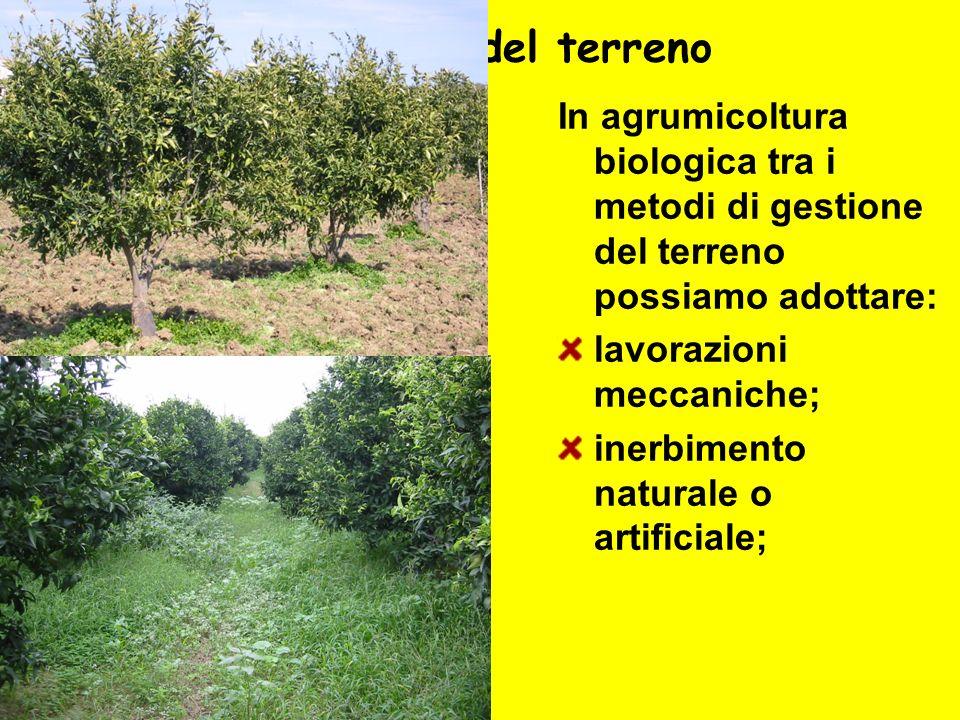 Gestione del terreno In agrumicoltura biologica tra i metodi di gestione del terreno possiamo adottare: