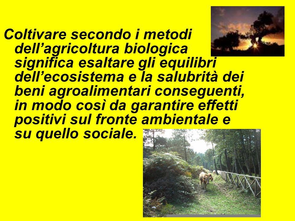Coltivare secondo i metodi dell'agricoltura biologica significa esaltare gli equilibri dell'ecosistema e la salubrità dei beni agroalimentari conseguenti, in modo così da garantire effetti positivi sul fronte ambientale e su quello sociale.