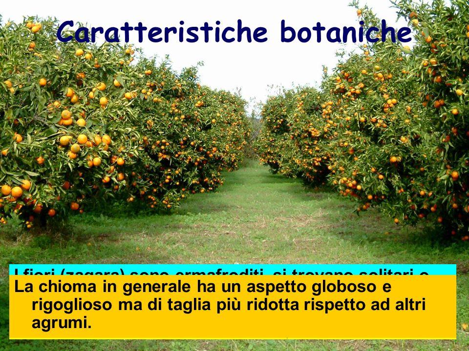 Caratteristiche botaniche