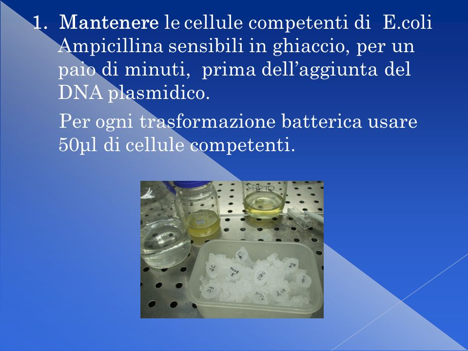 1. Mantenere le cellule competenti di E