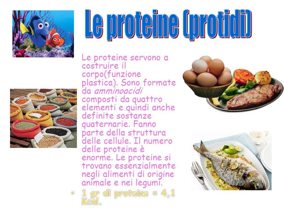 Le proteine (protidi)