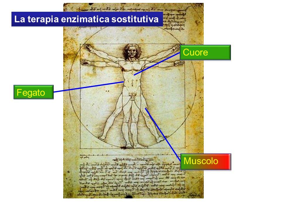 La terapia enzimatica sostitutiva