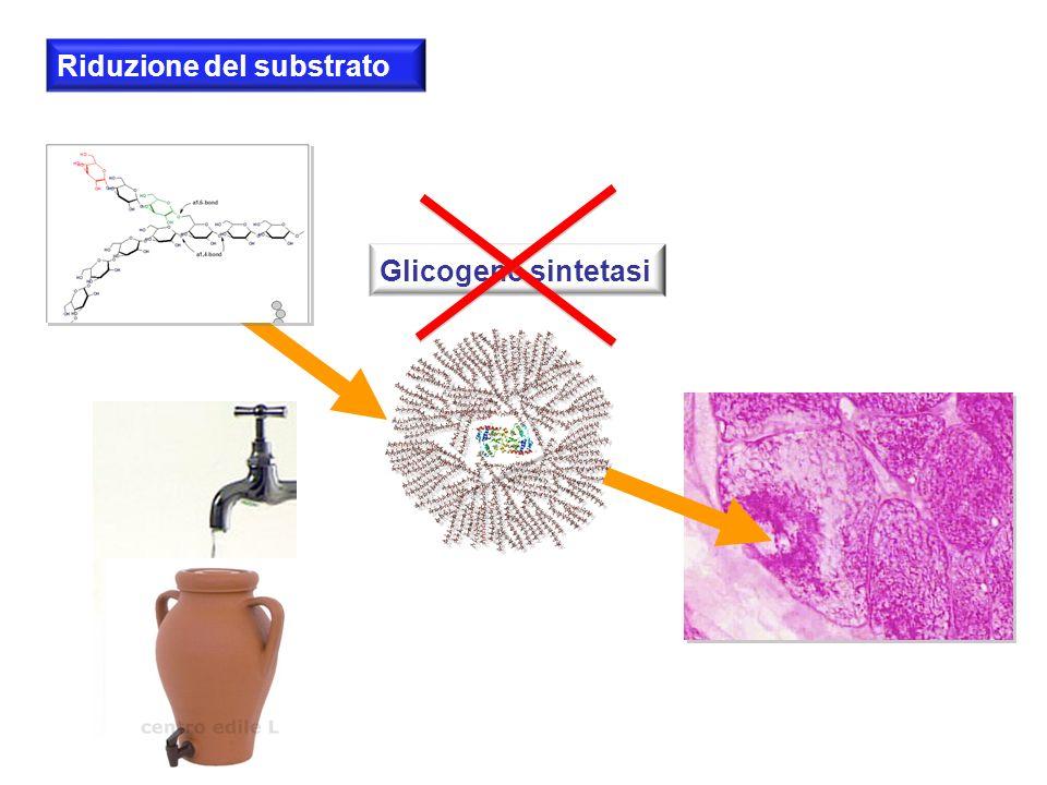 Glicogeno sintetasi Riduzione del substrato